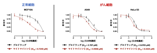 プロドラッグ1 およびマイトマイシンCの毒性試験の図