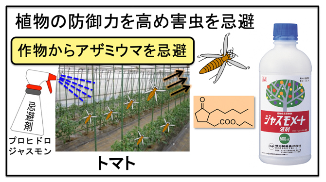 新たな害虫忌避剤によるアザミウマ類防除の図