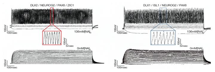 活動電位の測定結果の図