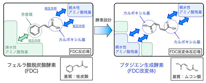 ブタジエン生成酵素のための酵素デザインの図