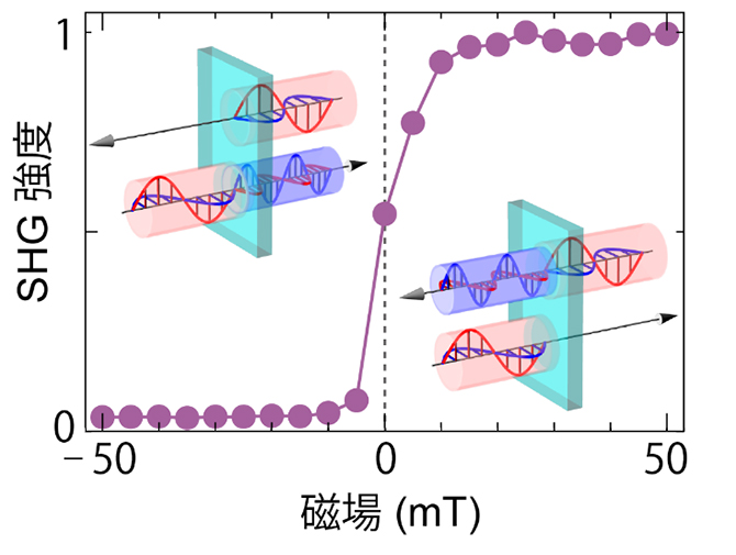 第二次高調波発生(SHG)強度の外部磁場依存性の図
