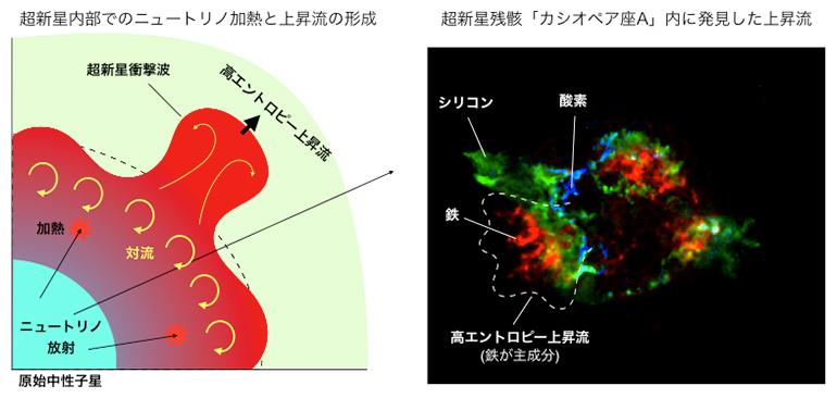 超新星内部での上昇流形成プロセスと超新星残骸カシオペア座Aの図