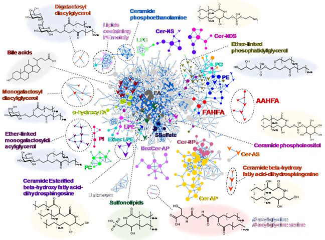 マウス糞便中脂質のMolecular spectrum networkingの結果の図