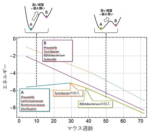 マウス腸内細菌叢の安定状態ダイアグラムの図