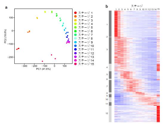遺伝子発現状態に基づいて描いたコムギの葉の発生過程のトラジェクトリの図