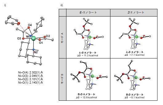 ニッケル錯体触媒と想定されるニッケル-エノラートの構造の図