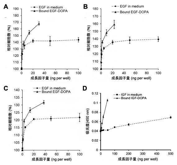 接着性成長因子の生理活性評価の図