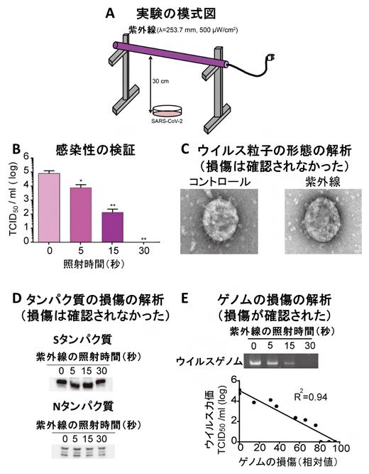 ウィルス 紫外線