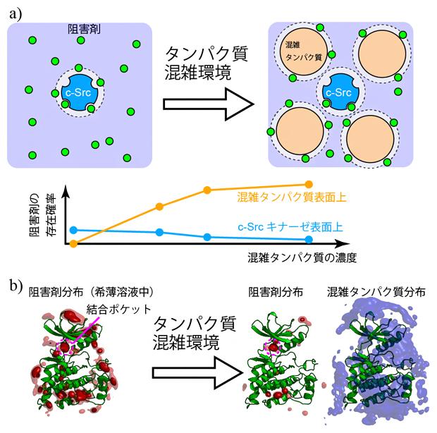 溶液の混雑化がもたらすc-Srcキナーゼと阻害剤の結合の変化の図