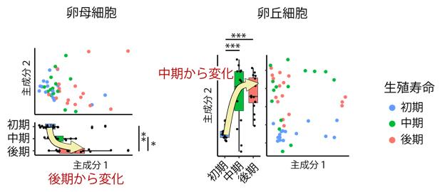 卵母細胞、卵丘細胞から得た遺伝子発現プロファイルの主成分解析の図