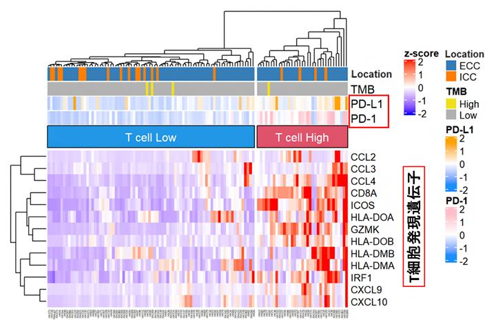 RNA解析による胆道がんの免疫分類の図