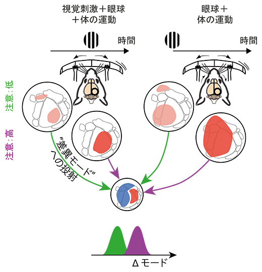動物が受け取る視覚情報の変化の由来の弁別の図