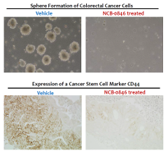 Images showing the effect of NCB-0846